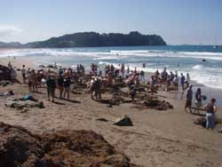 The crowds get a little thick on hot water beach - but it is still cool
